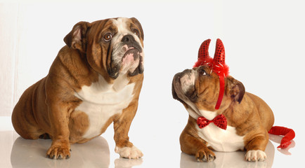 bulldog praying for little help from above with devilish problem