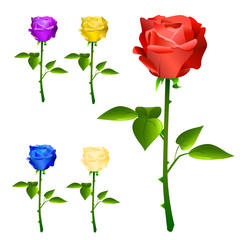 roses with different colors vector