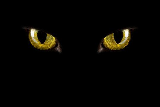 cat's eyes glowing in the dark. halloween background