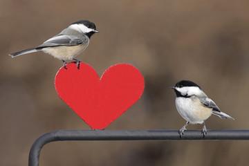 Fotoväggar - Pair of Birds With Heart