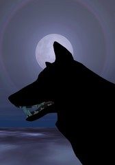 loup une nuit de pleine lune
