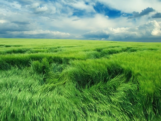 Endless green field