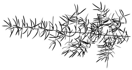 Branch Silhouette 01 - detailed illustration