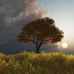 autumn tree at sunset
