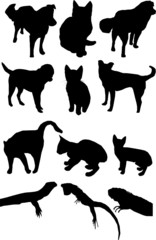 Dog, cat, lizard vector silhouettes