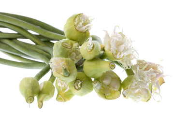 Spring Onion Flowers Isolated