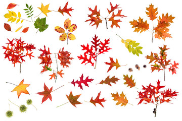 colored leaves vector collection