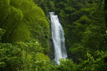 Waterfall in rainforest jungle