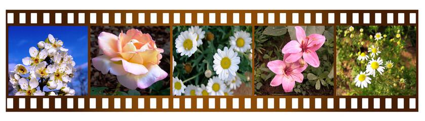 pellicola con fiori