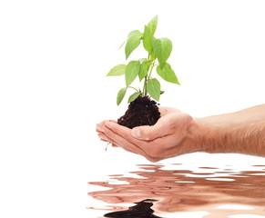 Green plant for better environment