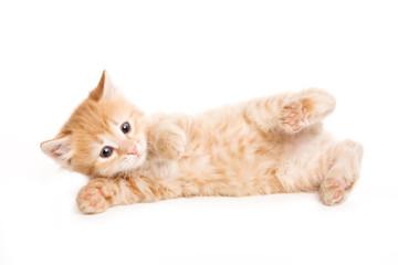 Small kitten on white background