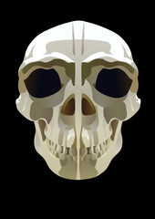 the illustration of the skull