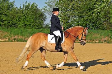 Pferde, Haflinger, Frau