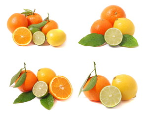 citrus collection 5