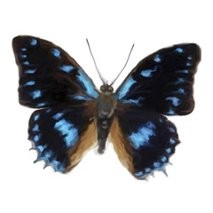 Schmetterling 090128 01