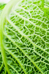 Close up of cabbage leaf