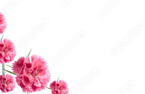 valentine card border pink carnation flowers Stock photo and