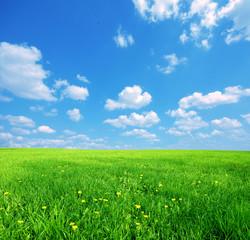 Sunny spring landscape