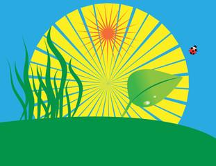 Grass, leaf, lady bug and sun