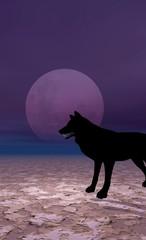 loup un soir de pleine lune