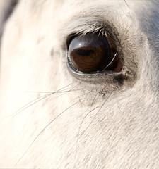 Eye of the horses