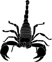 vector - color scorpion isolated on white background