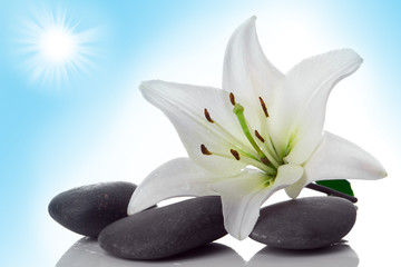 Wall Murals Water lilies madonna lily and spa stone