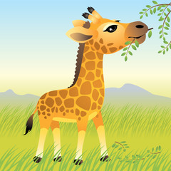 Photo sur Toile Zoo Baby Animal collection: Giraffe. More animals in my gallery.
