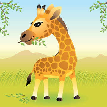 Baby Animal collection: Giraffe