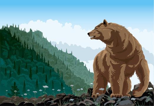 The bear rises on a grief