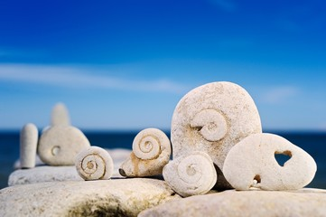 Snails from a stone