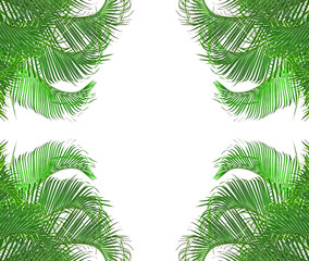 coins de cadre de palmiers-multipliants verts