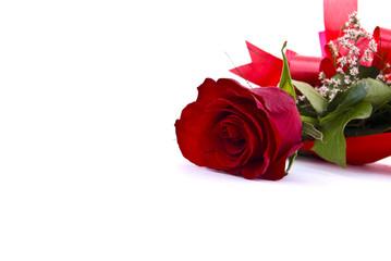 Single red rose against white backround