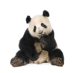 Tuinposter Panda Giant Panda (18 months) - Ailuropoda melanoleuca