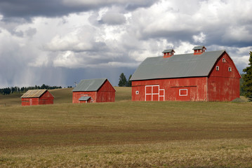 Three Red Barns
