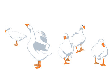 flock of geese, vector illustration
