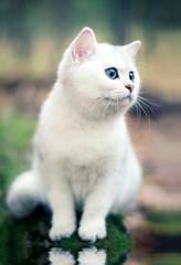 kitten in forest