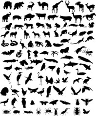 Vector silhouettes of animals (mammals, birds, fish, insects)