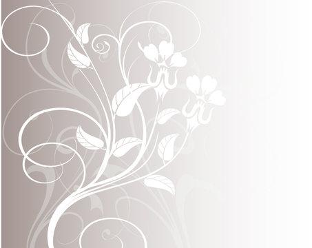 floral blanches et fond gris