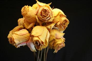Roses sèchées