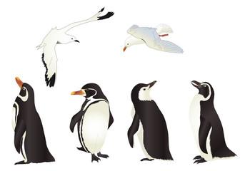 Pinguini e Gabbiani