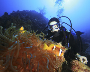Scuba Diver watches Anemonefishes
