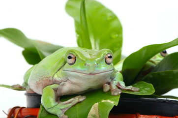 frogs in a plant