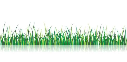 A vector grass illustration