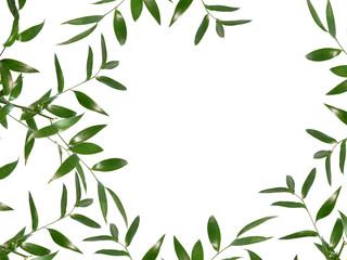 Beautiful green leaves border isolated on white background