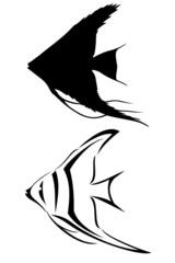 A black tribal angelfish tattoo