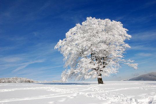 Baum im Schnee