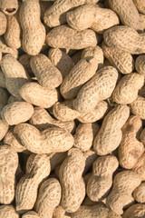 peanuts reflecting in sunlight
