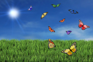 Wild and Free Butterflies