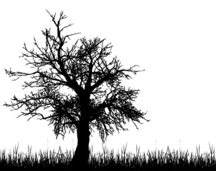 Old tree silhouette
